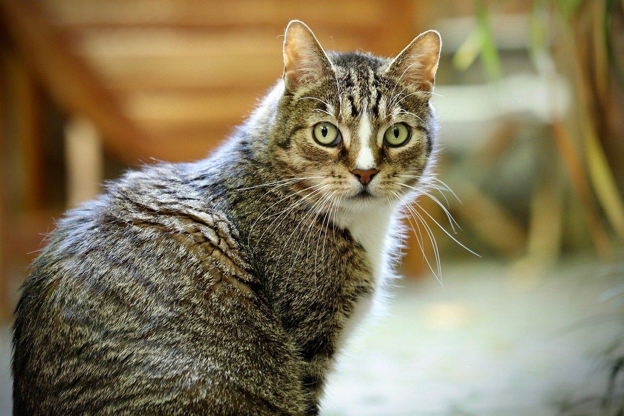cat-4348355_1280